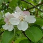 flor-pero-ronda_mayo-08-0051