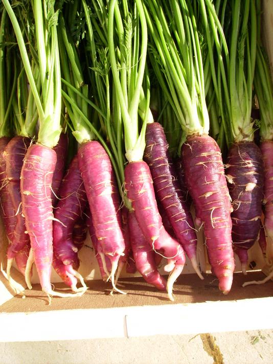Zanahoria Mora Slow Food Sevillaysur Comprar añadir al carrito el producto hortaliza. slow food sevillaysur